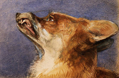 Fox Pastel - Head Of A Fox by John Frederick Lewis