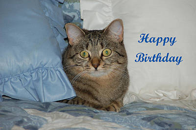 Cat Photograph - Heidi Birthday by Aimee L Maher Photography and Art Visit ALMGallerydotcom