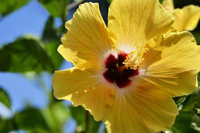 Hibiscus Photograph - Hello Yellow by Melanie Moraga