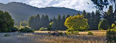 Henry Cowell Meadow Sunset Print by Larry Darnell