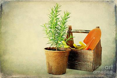 Herbs Print by Darren Fisher
