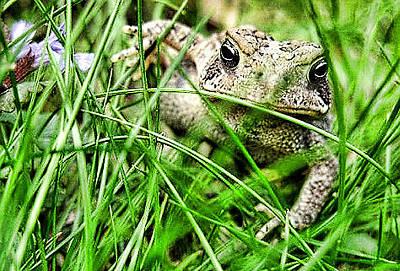Here Comes Froggy Original by Jeffrey Platt
