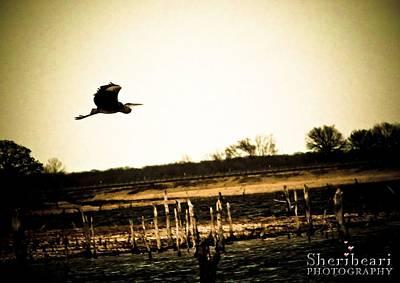 Wings Photograph - Heron In Flight by Sheri Bartay