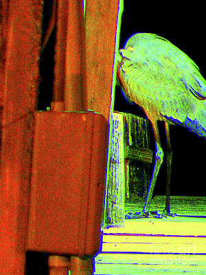 Jope Photograph - Heron In Hiding by Joe Jake Pratt