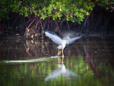 Heron Takes Flight Print by Jim DeLillo