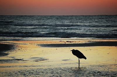 Heron Waiting For The Sunrise Print by Michael Thomas