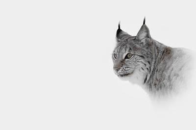 Claw Digital Art - Hi Key Lynx by Andy Astbury