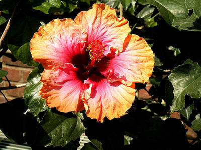 Shoe Photograph - Hibiscus Flower by Lisa Phillips