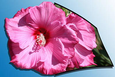 Flowers Photograph - Hibiscus by Shane Bechler