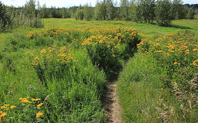 Hiking Trail Through Yellow Flowers Print by Jim Sauchyn