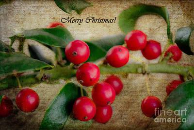 Holly Christmas Print by Barbara K