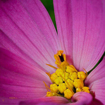 Honey Bee's Candy Dish Print by Mitch Shindelbower