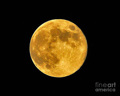 Honey Moon Close Up Print by Al Powell Photography USA