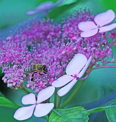 Honeybee On Pink Lace Print by Becky Lodes