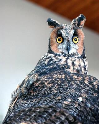 Owl Photograph - Hooter  by LeeAnn McLaneGoetz McLaneGoetzStudioLLCcom