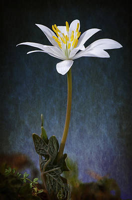 Macro Floral Photograph - Hope by Nathan Hopper