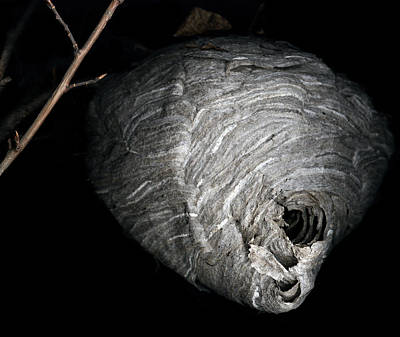 Hornet Nest Print by David Kleinsasser