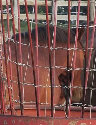 Photograph - Horse-14 by Todd Sherlock