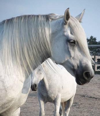 Photograph - Horse-15 by Todd Sherlock