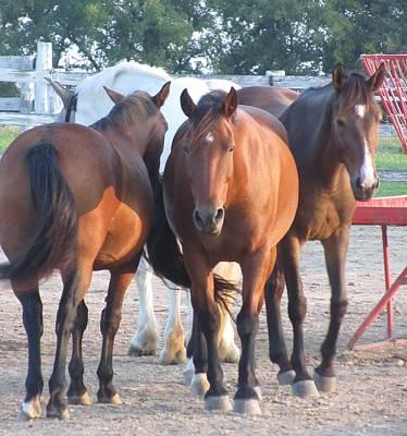 Photograph - Horse-16 by Todd Sherlock