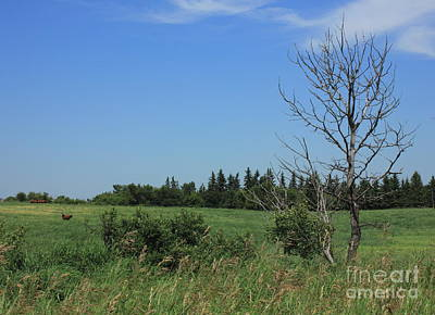 Rural Photograph - Horse Pasture On The Plains by Jim Sauchyn