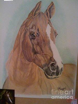 Custom Horse Portrait Drawing - Horse Portrait by Angela Q