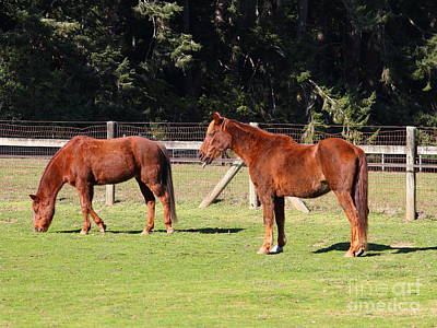 Horses At The Ranch . 7d9774 Print by Wingsdomain Art and Photography
