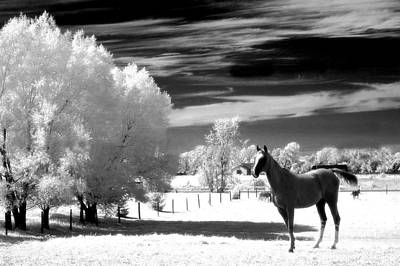 Horses Black White Surreal Nature Landscape Print by Kathy Fornal