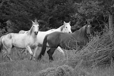 Horses In Black And White Print by Rick Rauzi