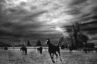 Nature Infrared Photograph - Horses Running Black White Surreal Nature Landscape by Kathy Fornal