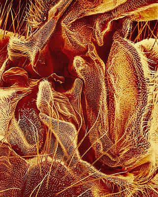 Hover Fly Body Surface, Sem Print by Susumu Nishinaga