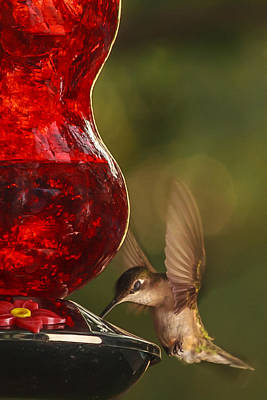 Hummingbird Photograph - Hummingbird At The Feeder by Keith Allen