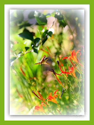 Birds Photograph - Hummingbird In The Daylilies With Green Border by Carol Groenen
