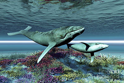 Caring Mother Digital Art - Humpback Whale Mother And Calf Swim by Corey Ford