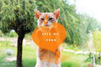 Soulful Eyes Digital Art - Hungry Cat by Augusta Stylianou