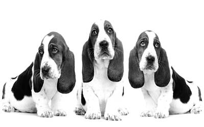 Dogs Photograph - Hush Puppies by Sumit Mehndiratta