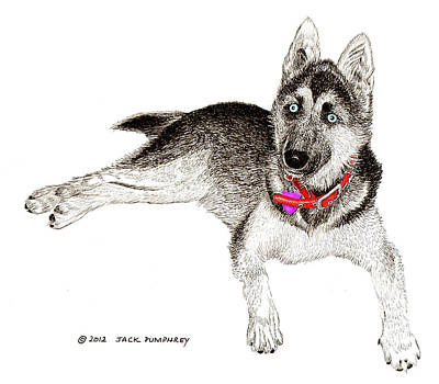Husky With Blue Eyes And Red Collar Print by Jack Pumphrey