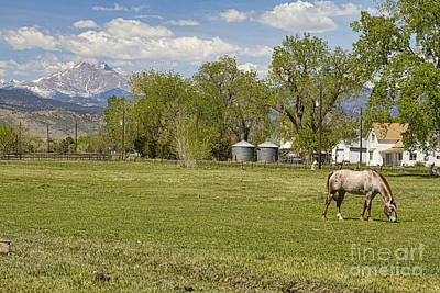Horse Photograph - Hygiene Colorado Boulder County Scenic View by James BO  Insogna