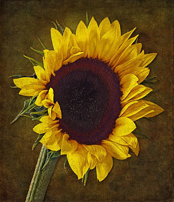 Sunflower Photograph - I Dance With The Sun by Susan Candelario