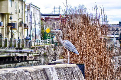 Heron Digital Art - I Should Have Went To Florida by Bill Cannon