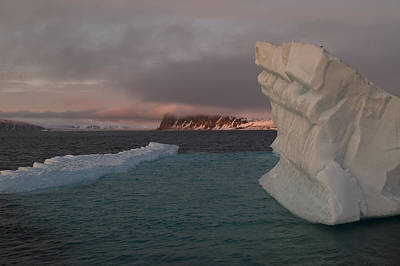 Sunset In Norway Photograph - Ice Formations Float In Blue Water by Norbert Rosing