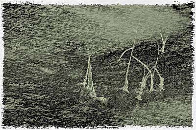 Icy Still Life Print by Odon Czintos