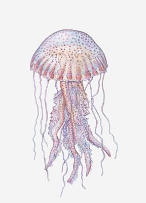 Jellyfish Digital Art - Illustration Of Mauve Stinger Jellyfish (pelagia Noctiluca) by Dorling Kindersley