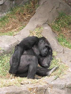 Gorilla Photograph - Im Beat by Tina Marie