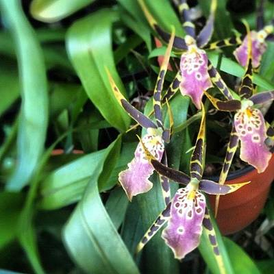 Orchids Photograph - In Bloom by Lindsay Bell