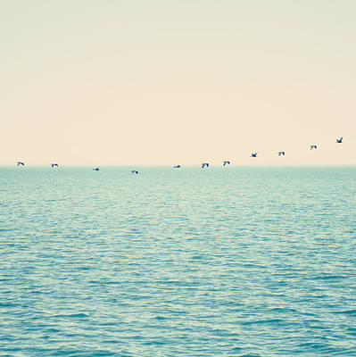 Of Birds Photograph - In Flight by AnyDirectFlight