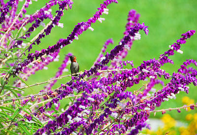 Hummingbird Photograph - In The Middle by Lynn Bauer