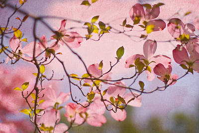 Dogwood Photograph - In The Pink Of Things by Rebecca Cozart