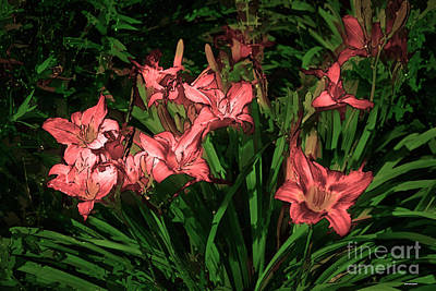 Gallery Website Photograph - In The Pink by Tom Prendergast