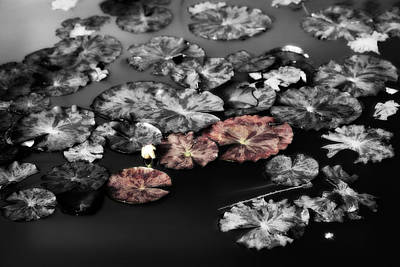 In The Pond Print by Bonnie Bruno